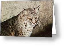 Bobcat Iv Greeting Card by DiDi Higginbotham