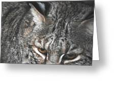 Bobcat Love Greeting Card by DiDi Higginbotham