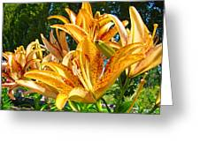 Bold Colorful Orange Lily Flowers Garden Greeting Card by Baslee Troutman