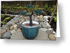 Bonsai Tree Medium Round Blue Ceramic Planter Greeting Card by Scott Faucett