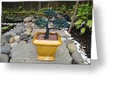 Bonsai Tree Medium Square Golden Vase Greeting Card by Scott Faucett