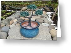Bonsai Tree Small Round Planter Blue Greeting Card by Scott Faucett