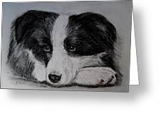Borden Collie Pup Greeting Card by Joan Pye