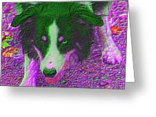 Border Collie Stare In Colors Greeting Card by Smilin Eyes  Treasures