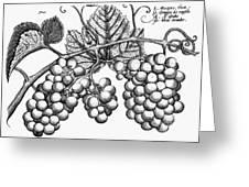 Botany: Grapes Greeting Card by Granger