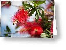 Bottle Brush Tree Greeting Card by Yurix Sardinelly