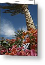 Bougainvillea Flowers Surround A Palm Greeting Card by Richard Nowitz