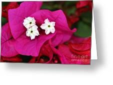 Bouganvillea Greeting Card by Sabrina L Ryan