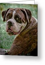 Boxer Smiles Greeting Card by DigiArt Diaries by Vicky B Fuller
