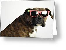 Boxer Wearing Sunglasses Greeting Card by Ron Nickel