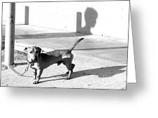 BOY MEETS DOG Greeting Card by Joe Jake Pratt