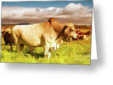 Brahma Bull And Harem Greeting Card by Gus McCrea