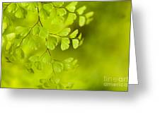 Branching Out Greeting Card by Reflective Moment Photography And Digital Art Images