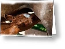 Brand New Colt..day Two Greeting Card by Lisa Moore