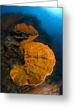 Bright Orange Sponge With Sunburst Greeting Card by Steve Jones