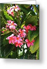 Brilliant Pink Plumaria Greeting Card by Craig Wood