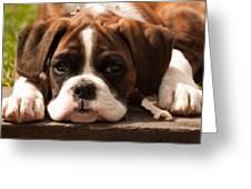 Brindle Boxer Pup Greeting Card by Bel Menpes