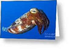 Broadclub Cuttlefish, Papua New Guinea Greeting Card by Steve Jones