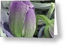 Broccoli Floret, Sem Greeting Card by Steve Gschmeissner