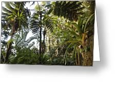 Bromeliad And Tree Ferns Greeting Card by Cyril Ruoso
