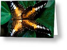 Brown Clipper Butterflies Mating Greeting Card by Terry Elniski