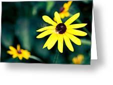 Brown Eyed Susan Greeting Card by Jame Hayes