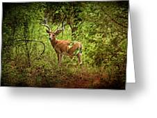 Buck In Full Velvet Greeting Card by Tamyra Ayles