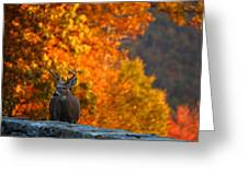 Buck In The Fall 03 Greeting Card by Metro DC Photography