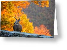 Buck In The Fall 04 Greeting Card by Metro DC Photography