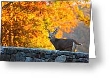 Buck In The Fall 07 Greeting Card by Metro DC Photography