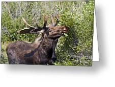 Bull Moose Greeting Card by Teresa Zieba