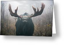 Bull Moose Testing Air For Pheromones Greeting Card by Philippe Henry
