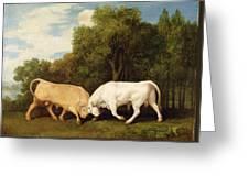 Bulls Fighting Greeting Card by George Stubbs