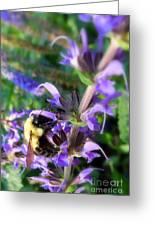 Bumble Bee On Flower Greeting Card by Renee Trenholm