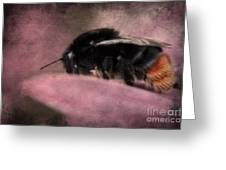 Bumblebee II Greeting Card by Angela Doelling AD DESIGN Photo and PhotoArt