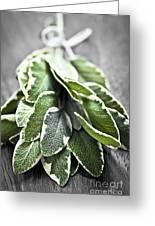 Bunch Of Fresh Sage Greeting Card by Elena Elisseeva