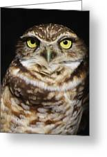 Burrowing Owl Greeting Card by Paulette Thomas