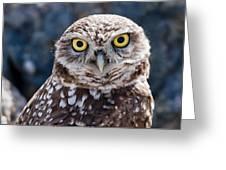 Burrowing Owl Portrait Greeting Card by David Martorelli