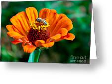Busy As Greeting Card by Dana Kern