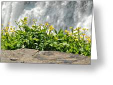 Buttercup With Waterfalls Greeting Card by Wayne Sheeler