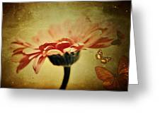 Butterflies Greeting Card by Cathie Tyler
