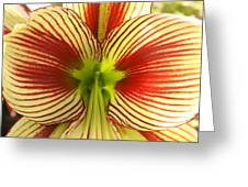Butterfly Amaryllis Greeting Card by Tanya Moody