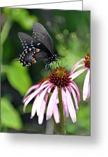 Butterfly And Coine Flower Greeting Card by Marty Koch