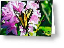 Butterfly And Rhododenren Greeting Card by Judy Via-Wolff