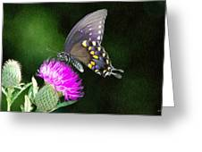 Butterfly And Thistle Greeting Card by Jeff Kolker