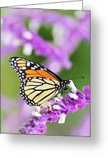 Butterfly Beauty Greeting Card by Elizabeth Budd