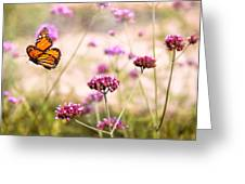 Butterfly - Monarach - The Sweet Life Greeting Card by Mike Savad