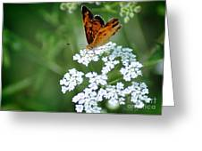 Butterfly On Lacy Wildflower Greeting Card by Nava  Thompson