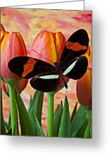 Butterfly On Orange Tulip Greeting Card by Garry Gay