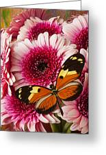 Butterfly On Pink Mum Greeting Card by Garry Gay
